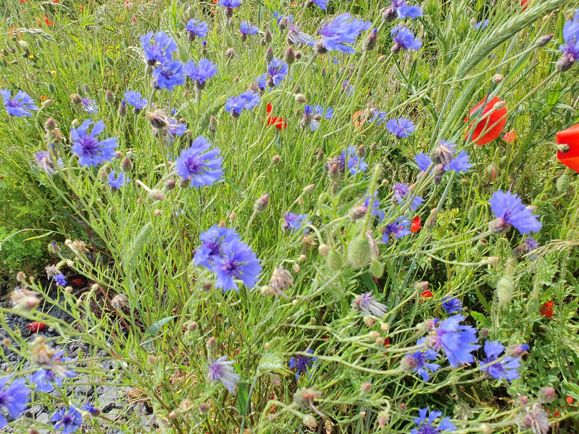 Pflanzen Blumen Sträucher