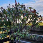 Wilde Pflanzen im Garten