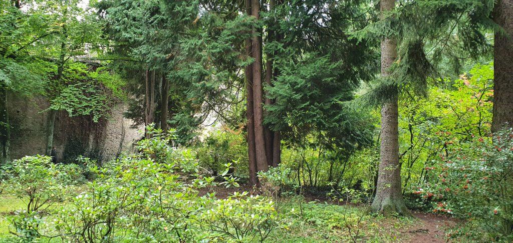 Waldgebiet am im Klostergarten in der Eifel