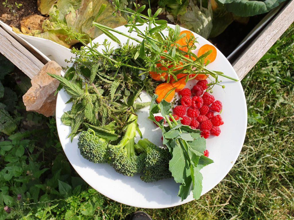 Wilkdkraeuter und Co. aus dem eigenen Anbau im Garten