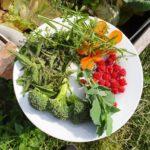 Kräutergarten ruck zuck - heute gepflanzt, morgen gegessen